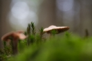 Leben im Wald